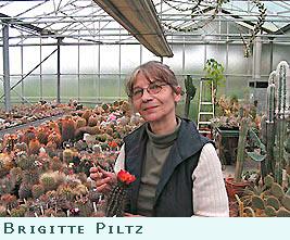 kakteen piltz your specialist nursery for cacti succulents and seeds